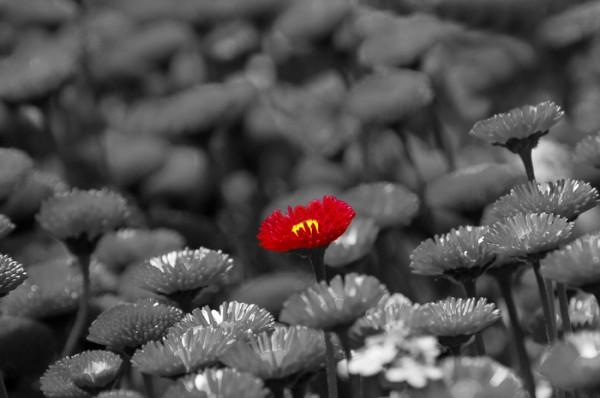 Red-Flower-600x398