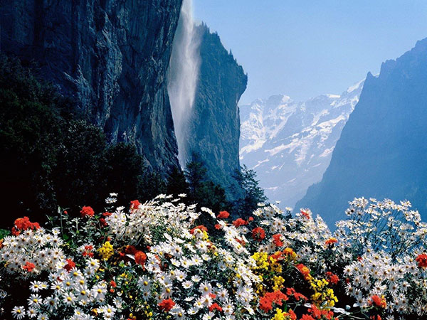 switzerland-mountain-flowers-iltwmt