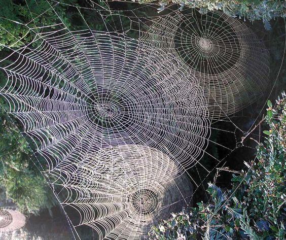 gossamer spider webs on Lingerie Briefs