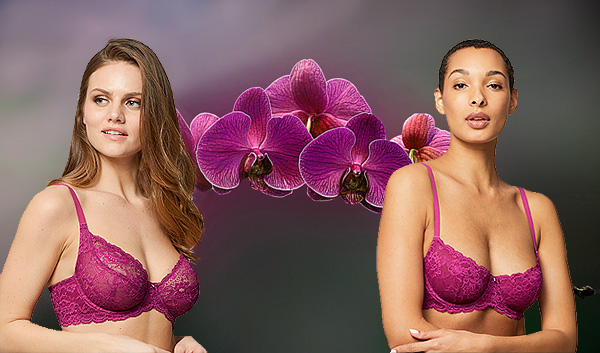 Montelle Divine full coverage underwire bra and Flirt Demi Lace Bra in wild orchid featured on Lingerie Briefs